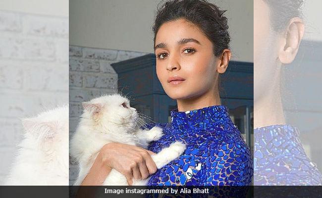 आलिया भट्ट ने वेलेंटाइन डे पर किसके साथ बिताया वक्त, खुद खोला यह राज