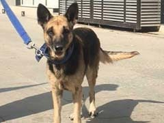 Gujarat Elections 2017: Not Only Politicians, Even Police Dog Is All Worked Up