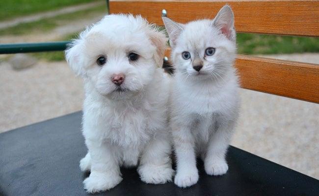 कौन सबसे ज्यादा समझदार, कुत्ते या फिर बिल्ली? यहां जानिए