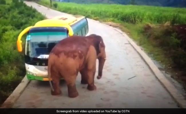 अचानक बस के सामने आ गया जंगली हाथी, फिर हुआ कुछ ऐसा जिसे देख लोग हुए हैरान