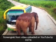 Watch: Elephant Attacks Bus, Cracks Windshield. Driver Trapped Inside