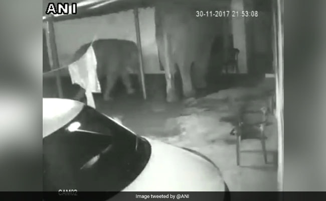 Elephant, Calf Enter Coimbatore House. No Food, They Leave. Watch