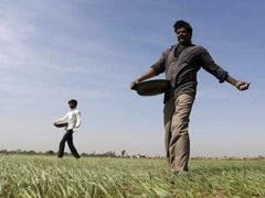 Government Hikes Wheat MSP By Rs 105 Per Quintal