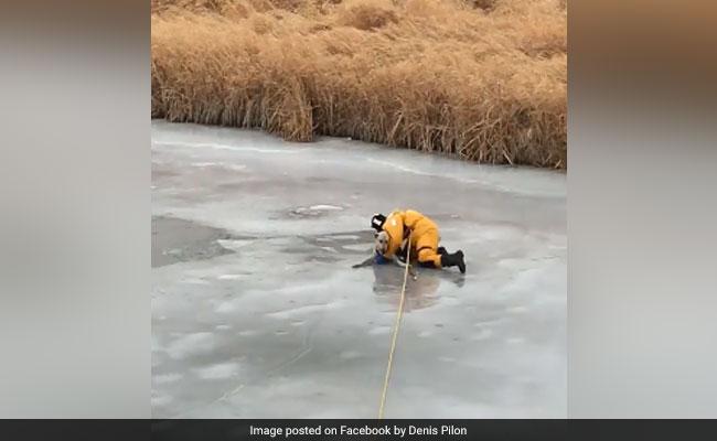 VIDEO: 'बर्फ की नदी' में फंस गया था कुत्ता, कुछ इस तरह जान पर खेल कर बचाया