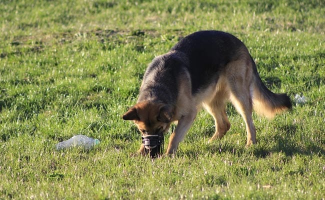 Dogs Trained To Sniff Out Endangered Species In Australia