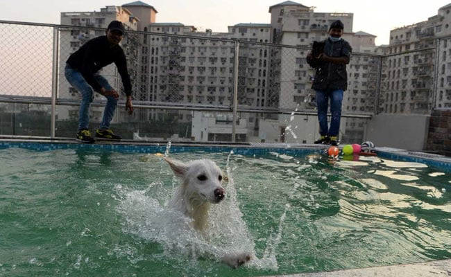 gurgaon dog hotel 650 afp