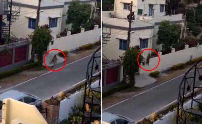 VIDEO: छत पर घूम रहे थे लोग अचानक आ गए तेंदुआ, देखिए फिर क्या हुआ