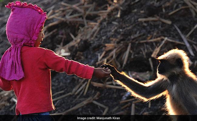 Modern-Day Mowgli: Village Boy Forges Bond With Gang Of Monkeys