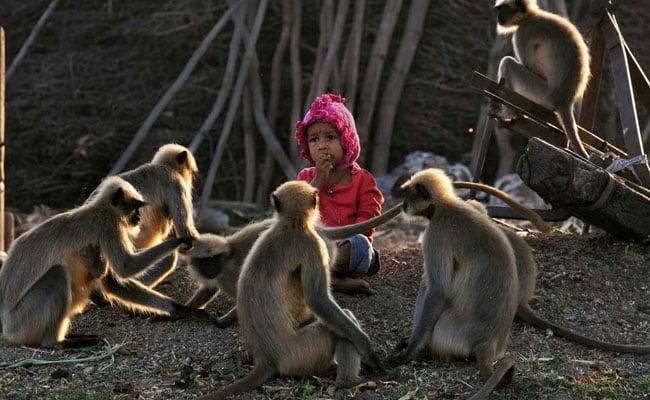 modern day mowgli