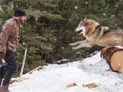 सलमान खान का भेड़िये से लड़ते हुए VIDEO हुआ रिलीज, देखकर रोंगटे हो जाएंगे खड़े