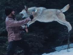 Salman Khan Vs A Wolf Pack In <I>Tiger Zinda Hai</i> Scene
