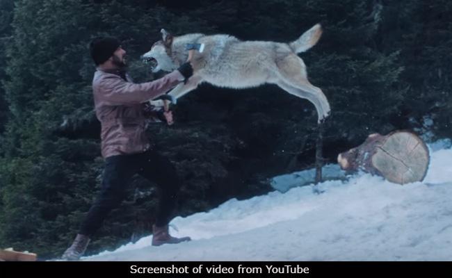 Salman Khan Vs A Wolf Pack In Tiger Zinda Hai Scene