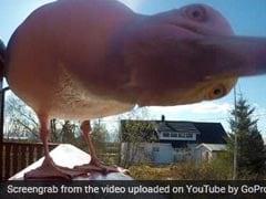 चिड़िया चुराकर ले गई थी कैमरा, 5 महीने बाद मिला हैरान करने वाला ये वीडियो