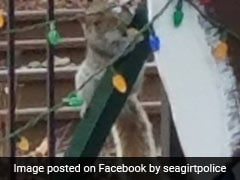 Squirrel Charged For Destroying Christmas Lights. Now Out On Bail