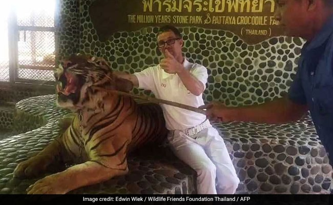 Tiger Poked By Stick As Tourists Pose For Pics In Thailand. Watch