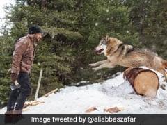 'टाइगर जिंदा है' के सेट पर कुल्हाड़ी लेकर भेड़िये से भिड़ गए सलमान खान और फिर...