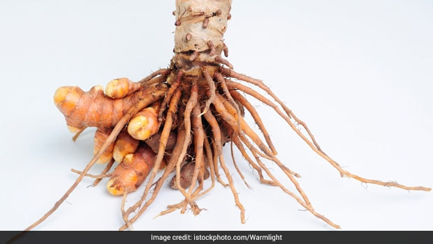 White Turmeric: How It Is Different From Yellow Turmeric And Its Health Benefits - NDTV Food