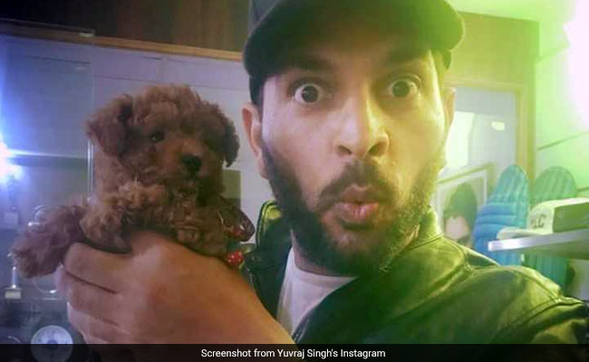 Meet Coco Singh, The Newest, Cutest Member Of Yuvraj Singh's Family