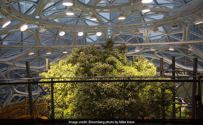 Inside Amazon's Spheres, Where Workers Chill In A Rainforest