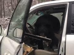 Bear Gets Locked In Car As Terrified Man Tries To Help. Watch Scary Video