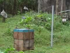 With Beehive Fence, Kerala's Farmers Tell Marauding Elephants To Buzz Off