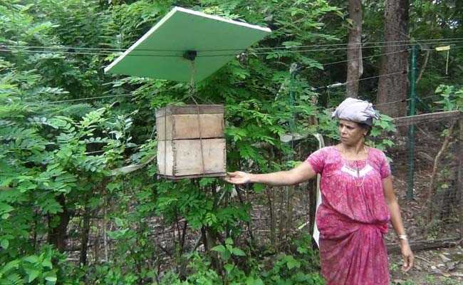 With Beehive Fence, Kerala's Farmers Tell Marauding ...