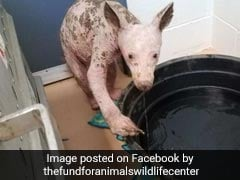 Hairless Animal Found In California Dumpster Identified