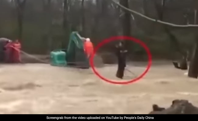 Woman Clings To Tree In Raging Flood. Watch Dramatic Rescue