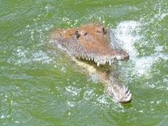 VIDEO: मछली पकड़ने गया था यह शख्स, तभी अचानक आ गया मगरमच्छ, फिर हुआ ये...