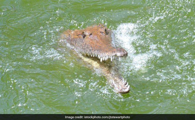 Man Goes Fishing In Crocodile-Infested Waters. Then This
