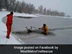 Firefighters Break Through Frozen Lake To Rescue Deer. See Pics