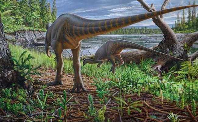 Fossil Of 2-Legged Dinosaur Swept Away In Ancient Australian River Found