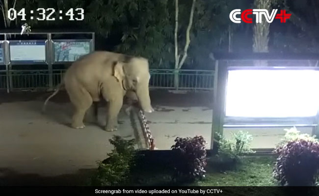 Wild elephant jumps China-Laos border fence in search of food