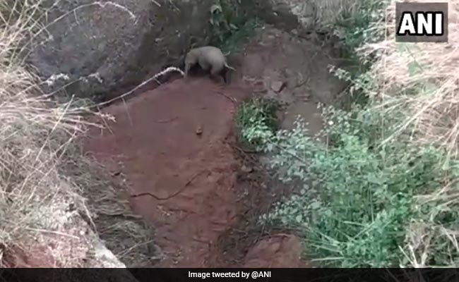 Baby Elephant Falls Into Ditch In Tamil Nadu. Village Comes To Its Rescue