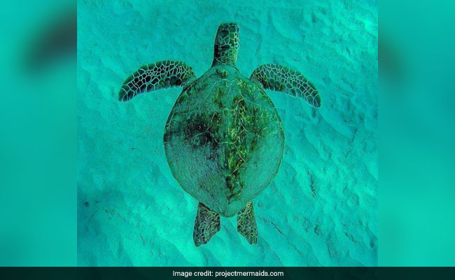14 Turtles Die Due To Extreme Heat Conditions In Gujarat's Kutch