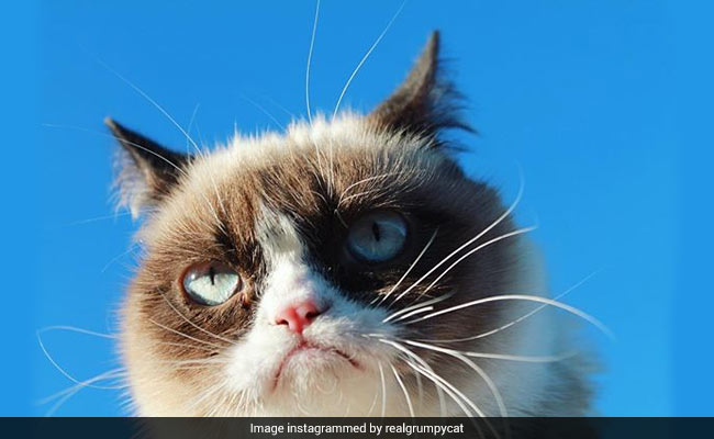 Grumpy Cat Wins $710,000 In Lawsuit And That's Her Happy Face