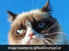 Grumpy Cat Owner Awarded Over $700,000 In Lawsuit. Cat Still Won't Smile.