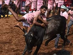 PETA Urges Tamil Nadu Government To Ban Jallikattu