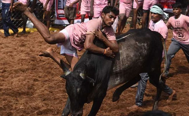 11 Injured In Palamedu Jallikattu