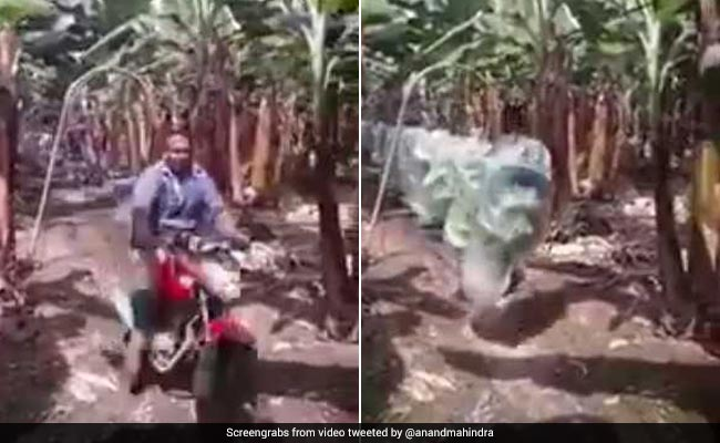 Anand Mahindra, Fan Of 'Jugaad', Tweets Video Of Nifty 'Kela-Konveyor'