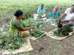 Organic Farmers Rue Lack Of Labour, Neglect, Corruption In Sector
