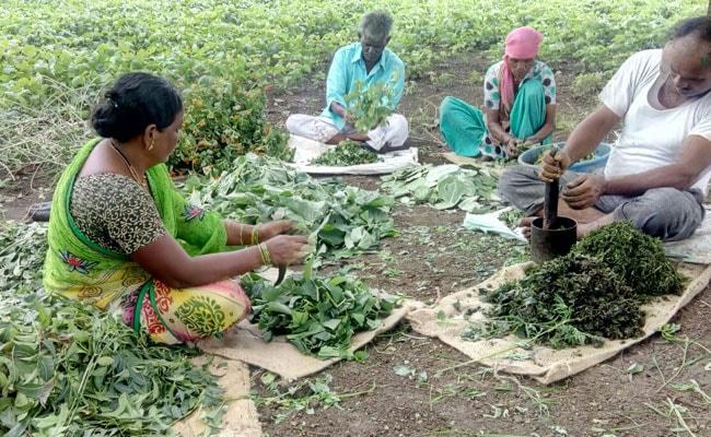 EXCLUSIVE : जैविक खेती से बनता किसानों और उद्यमियों का नेटवर्क, हताशा के बीच उम्मीद का झोंका