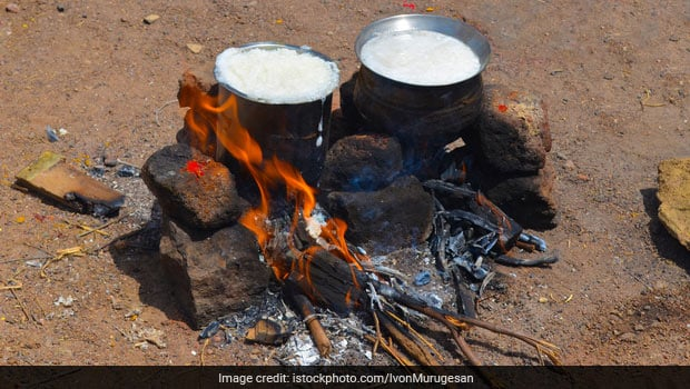 Pongal 2020: Why People Let Rice and Milk Overflow Out Of Vessels During Pongal Celebrations