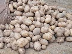 Why UP's Potato Farmers Are Not Looking Forward To Union Budget