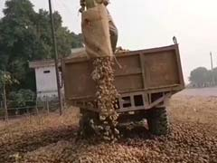 Why Potatoes Are Being Dumped In Uttar Pradesh