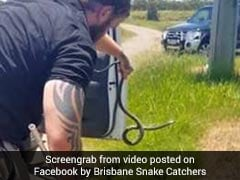 Man Finds Snake Slithering Over Arm While Driving. Watch Thrilling Rescue