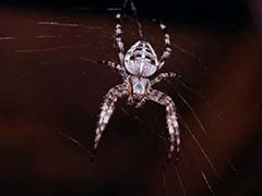 Spiders Can Float In The Air. Scientists Just Found Out How They Lift Off