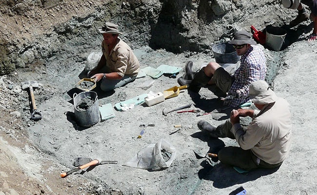 Extinct Giant Burrowing Bat Fossil Found In New Zealand