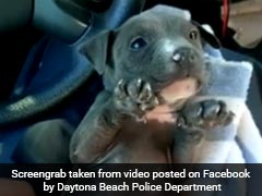 Video Of Shivering, Abandoned Puppy Goes Viral - And Has A Happy Ending