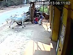 Karnataka Girl Saves Brother From Raging Cow. Brave Act Caught On Camera
